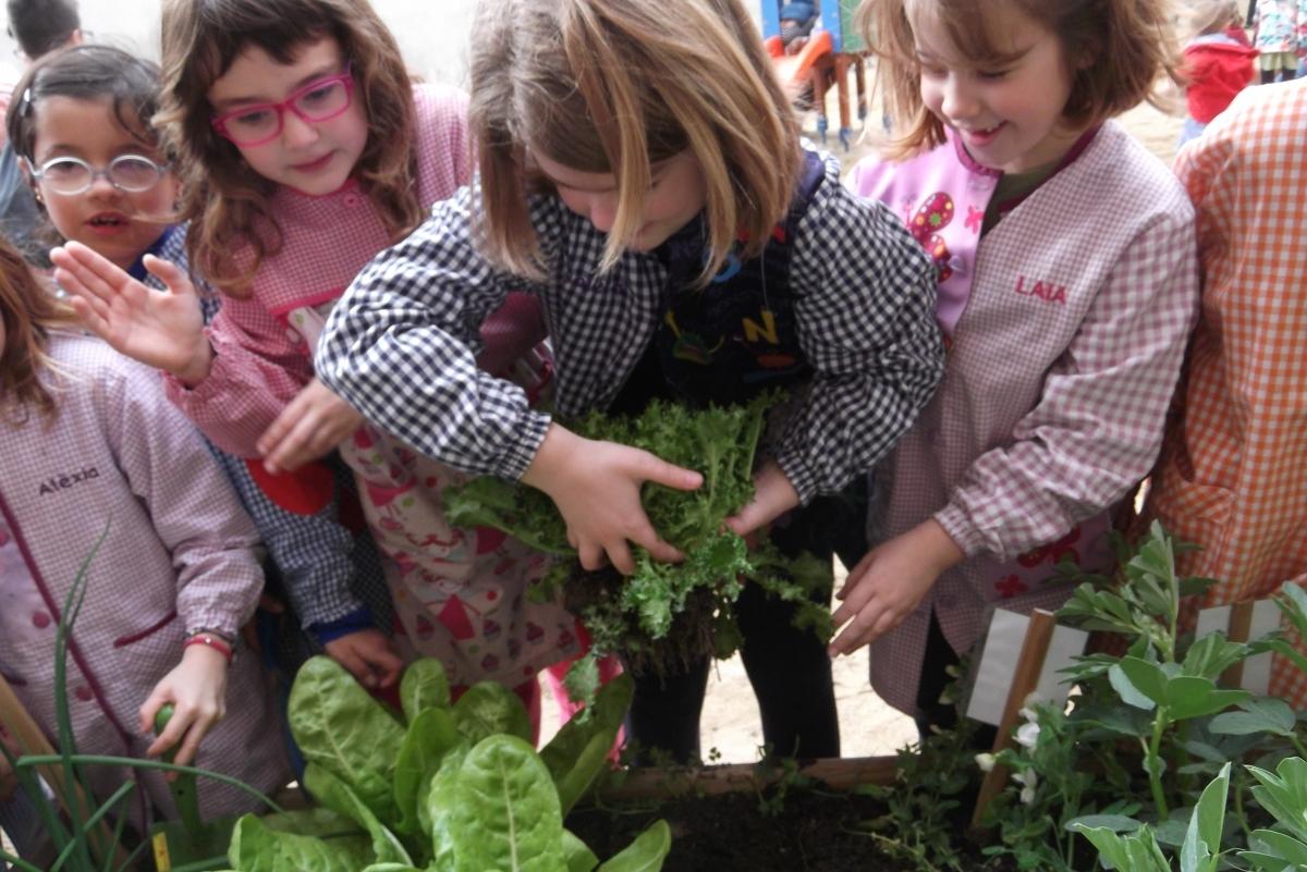 Niños en el huerto de la escuela